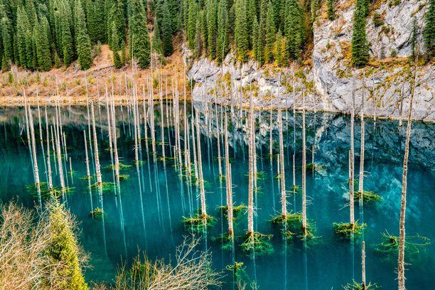 Maanjäristyksen seurauksena syntynyt järvi peitti metsän alleen.