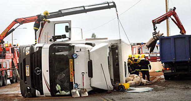 Yli 70 sikaa kuoli onnettomuudessa.