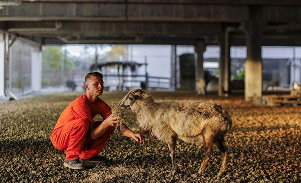 Seth Beckman pitää eläimistä.