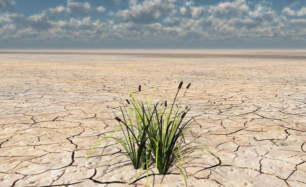 Muun muassa kuivuus on yksi vitsauksista, joita kuumuusennätyksiä rikkovat kesät tuovat tullessaan.