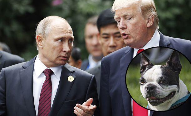 Presidentti Sauli Niinistön Lennu-koira on joutunut samaan maalaukseen yhdessä Vladimir Putinin ja Donald Trumpin kanssa.