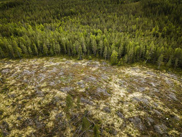 Metsähallituksen hakkuut. Kolmisen vuotta vanha avohakkuualue NOrvajärven luoteispuolella.