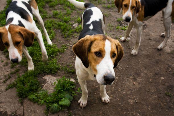 Koirien haukkuminen sai aikaan riidan Joensuun Kiihtelysvaarassa.
