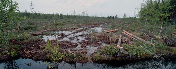 Soidensuojeluohjelman valmistelun keskeyttäminen viime syksynä on ollut ympäristöjärjestöjen suuri suru.