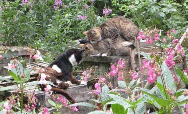Suomessa hylätään vuosittain arviolta noin 20 000 kissaa.