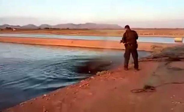 Krokotiilin ampunutta poliisia voi odottaa jopa yhdeksän vuoden vankeustuomio, sillä Meksikossa krokotiili on rauhoitettu eläin.