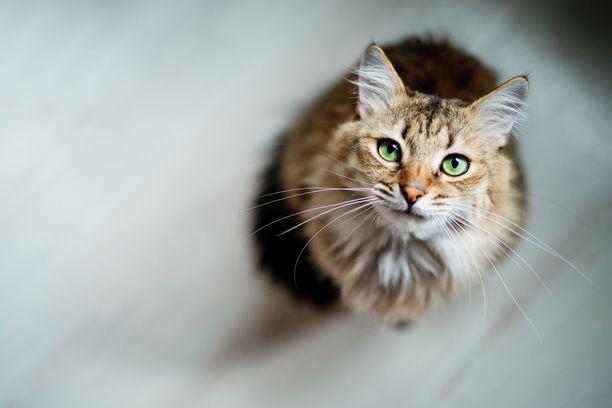 """""""Kissaa pidetään helppona lemmikkinä, eikä tajuta, mitä se vaatii. Tämä näkyy työssäni kissojen kanssa"""", Tua Onnela sanoo."""