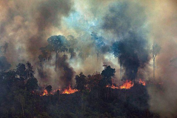 Greenpeacen julkaisema kuva näyttää, kuinka Amazon roihuaa Paran osavaltiossa Brasiliassa.