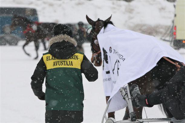 Dopingtestiin joutuva hevonen saa raviradan toimihenkilön peräänsä heti kilpailusuorituksen jälkeen. Hevosista otetaan erillisissä näytteenottotiloissa sekä virtsa- että verinäyte.