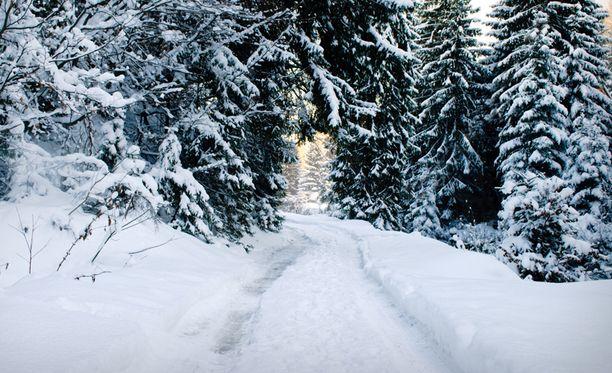 Erikoinen kohtaaminen metsässä sai ruotsalaimiehen kirjoittamaan asiasta Facebookiin.