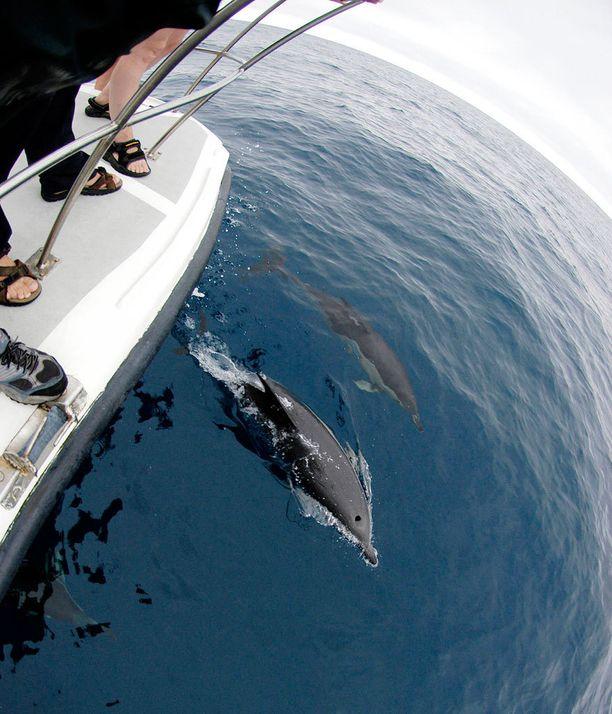 Delfiinien bongailijan kannattaa tutustua retken järjestäjän periaatteisiin. Jahtaamista ei tule hyväksyä.