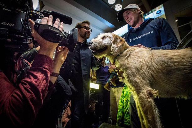 Näin reippaasti ecuadorilainen kulkukoira esiintyi median edessä viime viikolla Tukholmassa.