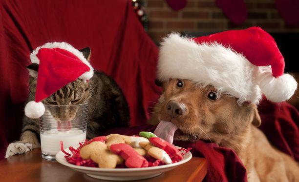 Lemmikeille kannattaa varata jouluksi omat, takuulla turvalliset herkut.