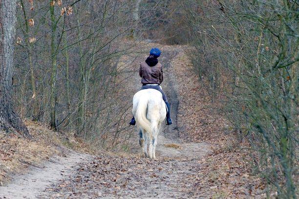 Monella autoilijalla hevonen tulee harvoin vastaan liikenteessä. Autokoulussa hevosen ohittamista käsitellään teoriatunneilla. Kuvituskuva.