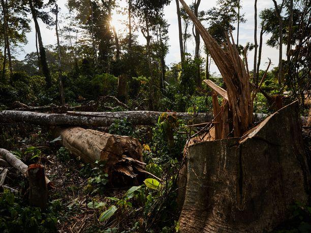 Hyvinvoivat sademetsät ovat oleellinen osa ilmastokriisin torjuntaa.