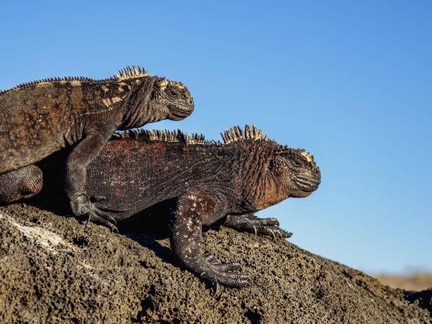 Galápagossaarten ainutlaatuisen faunan, eli eläimistön, suojelemiseksi aluehallinto päätti kieltää ilotulitteiden tuonnin, myynnin ja käytön.