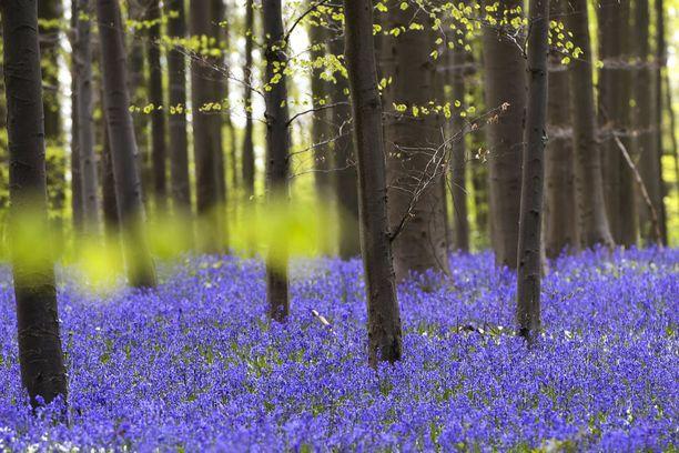 Keväinen näky on kerrassaan upea!