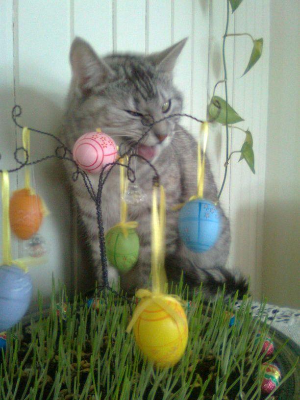 Wilma iskee silmää ja toivottaa hyvää pääsiäistä!