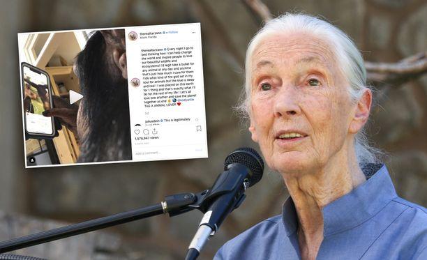 Tohtori Jane Goodall on tunnettu eläinten oikeuksien puolustaja.