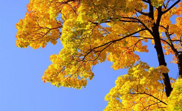 Syyskuussa on mahdollista nauttia vielä kesäisistä lämpölukemista.