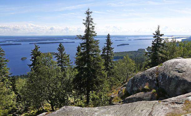 Kolin kansallispuistossa on julistettu yleinen luontorauha.