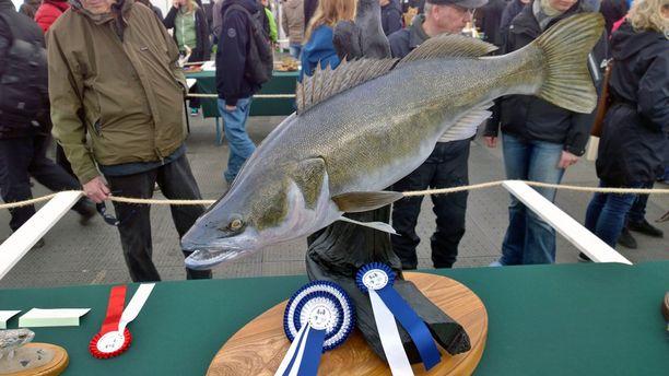 Ruotsalainen Bo Wessman täytti kuhan ja voitti kalasarjan.