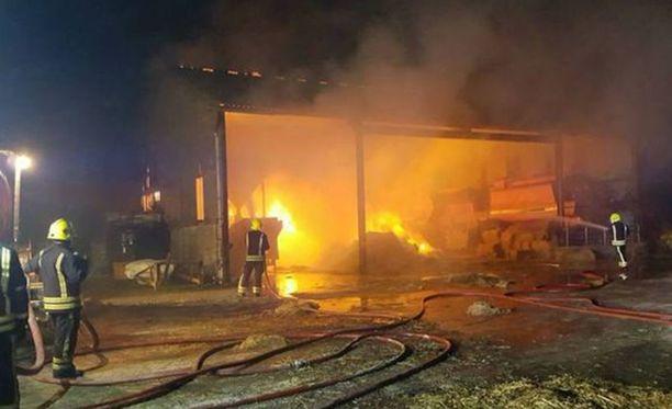 Helmikuun tulipalossa tuhoutui 60 tonnia heinää, mutta possut saatiin pelastettua.