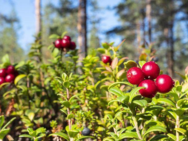 Poikkeuksellisen lämmin syyssää saapuu tänään Suomeen.