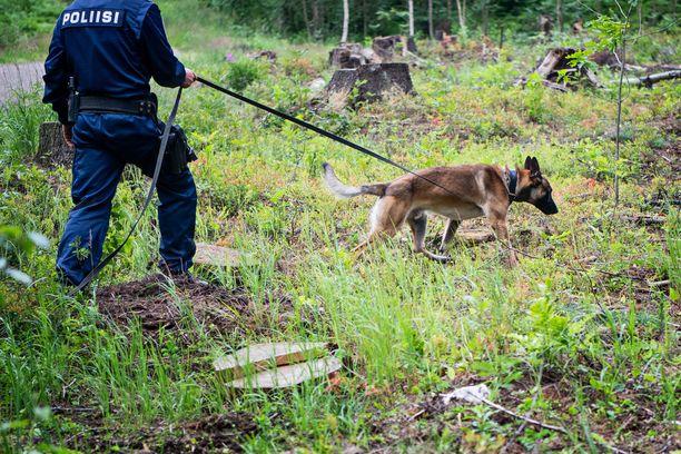 Useat poliisikoirat auttoivat etsimään Valkkisjärven rannasta kadonnutta miestä. Hänet löydettiin etsintöjen päätteeksi keskiviikkona.