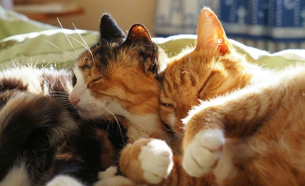Jokainen voisi ottaa Nabi-kissasta mallia. Kuvituskuva.