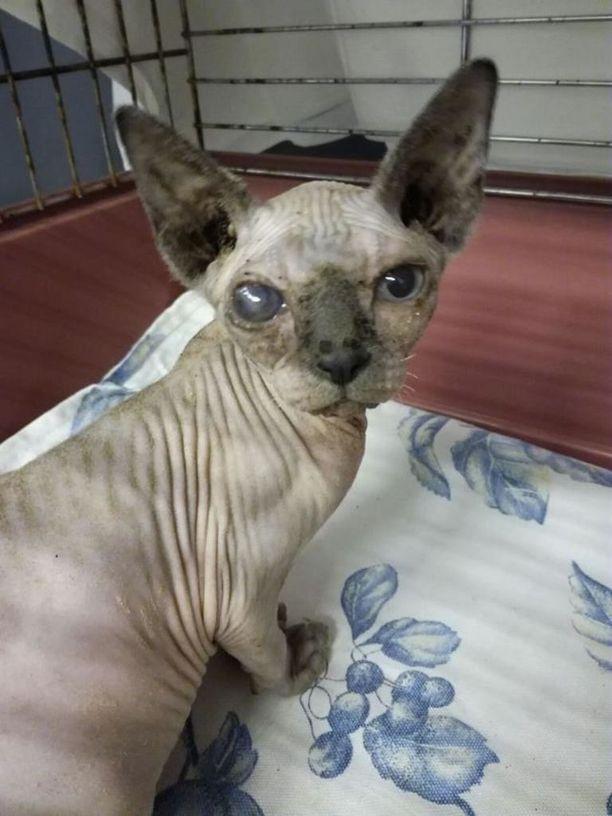 Eläinsuojelukeskus Onnentassun mukaan pennuilla oli löydettäessä hengitystie- ja silmäoireita.