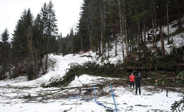 Kuusimetsää kaatui kymmenen metrin matkalta kisaladulle Oberstdorfin myrskytuulessa.