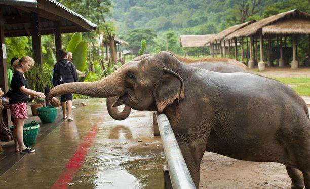 Pohjois-Thaimaassa, kaukana paratiisirannoista sijaitsee Elephant Nature Park. Sen asukkaat ovat entisiä työjuhtia, jotka on pelastettu viettämään eläkevuosiaan luonnonpuiston alueella.