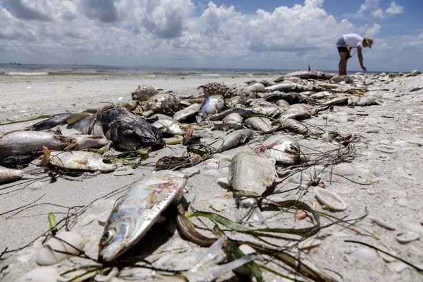 Nykyinen punainen vuorovesi on pysynyt Floridan rannikolla jo kymmenen kuukautta