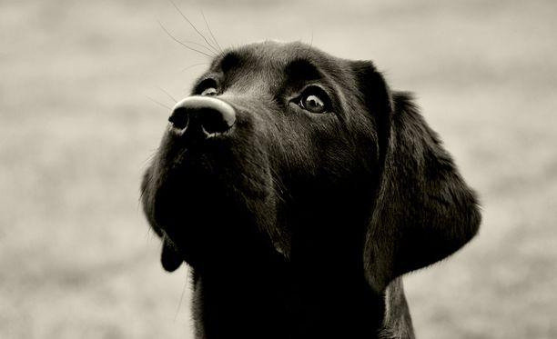 Kuvan koira ei liity tapaukseen.