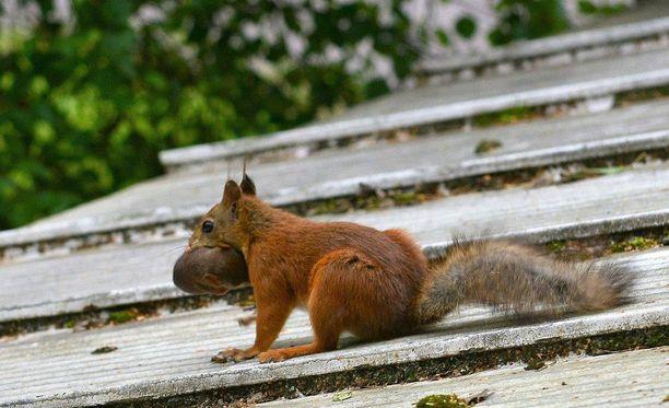 Yhdessä kuvassa orava näyttää laskevan liukumäkeä poikasen kanssa.