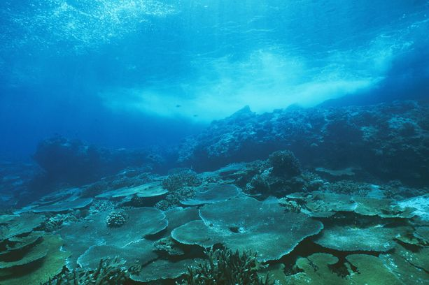Sukellus on suosittu harrastus Joulusaarella.