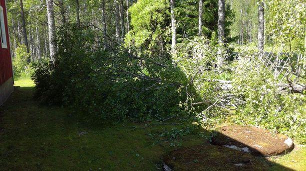 Parkanossa iso pihapuu kaatui metrin päähän talosta.