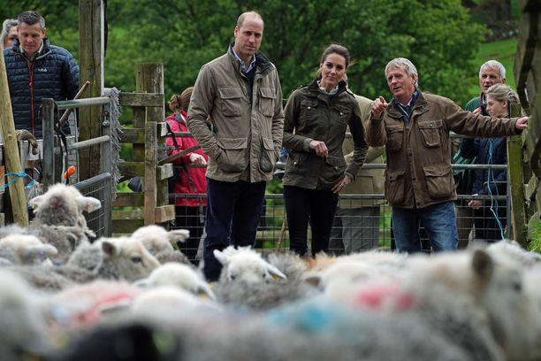 William ja Catherine tiirailivat lampaita ensin vähän kauempaa.