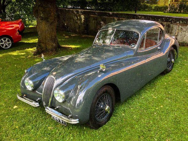 Jaguar tyylikkään harmaassa turkissa.