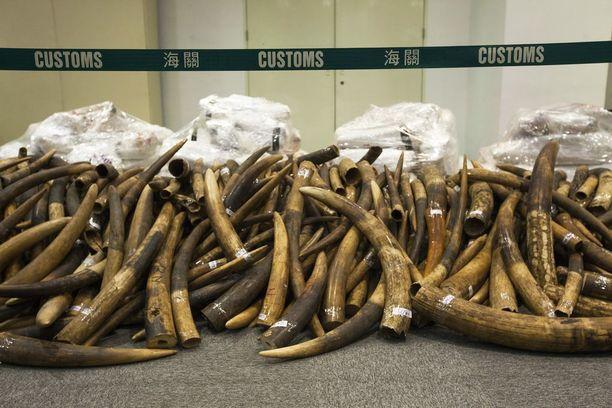 Hongkongin tulli takavarikoi viime heinäkuussa 7,2 tonnia norsunluuta.