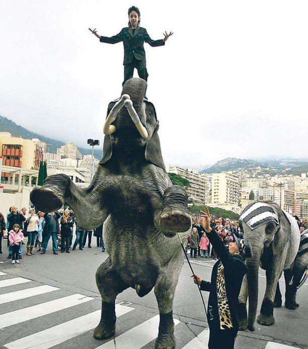 NORSUPARAATI Elefantit esittelivät viikonloppuna osaamistaan perinteisillä sirkusfestivaaleilla Monacossa.