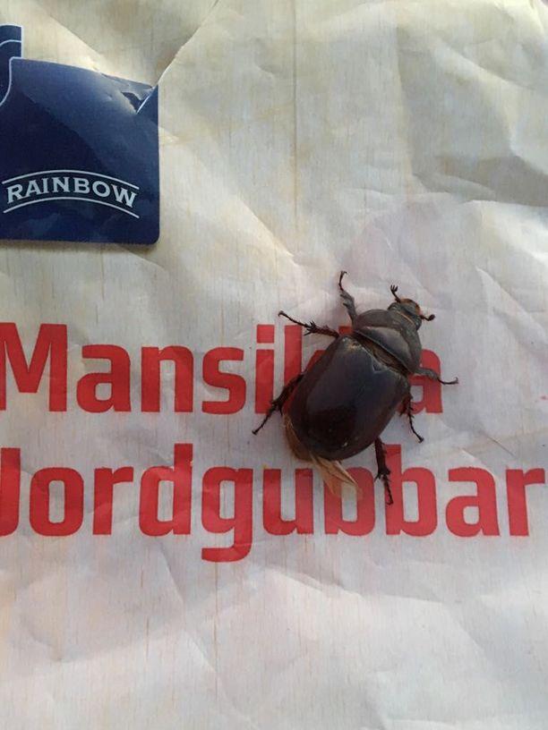 Lasse Juvonen löysi elävän ötökän puolen kilon Rainbow-pakastemansikkapussista.