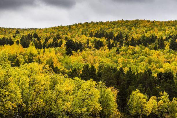 Syyskuun viimeisten viikkojen ennustetaan olevan lämpimämpiä ja aurinkoisempia.