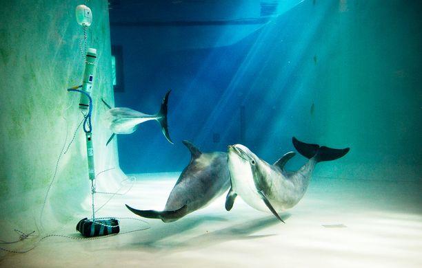 Särkänniemen delfiinit ollaan siirtämässä pois Tampereelta.