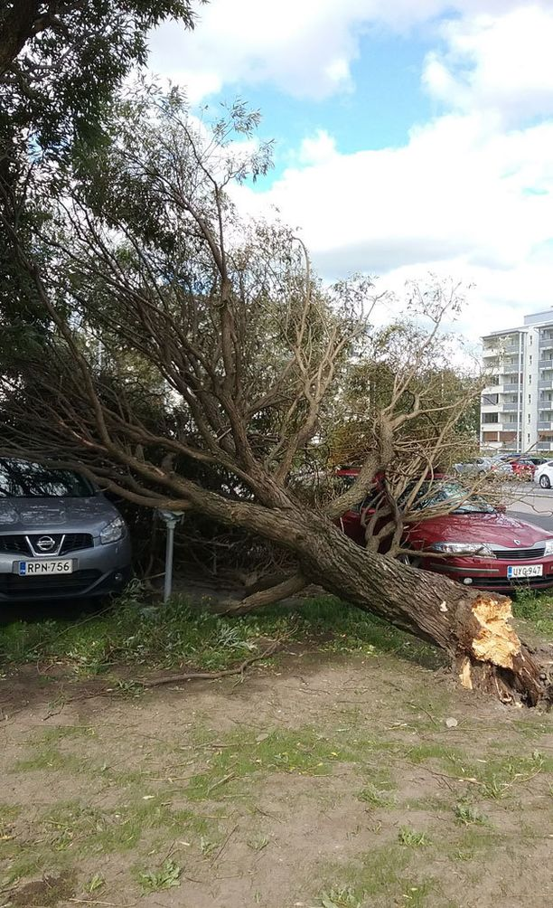 Tampereella iso puu kaatui kahden henkilöauton päälle...