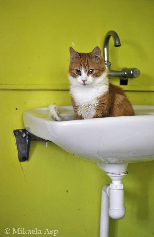 Kissatalossa on tällä hetkellä noin 200 asukasta.