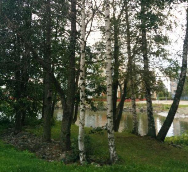 Kaupunginpuutarhuri Kirsi Kujalan mukaan puisto on kaupungin edustusaluetta, ja puutarhanhoidon ykköspuistoja.