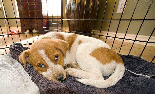 Etelä-Suomen aluehallintovirasto varoittaa rescue-koirien riskeistä. Kuvituskuva.