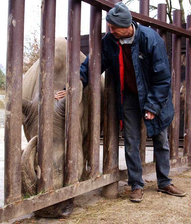 Sudan on ainoa elossa oleva uros. Kuvattu Dvur Kraloven eläintarhassa vuonna 2009.